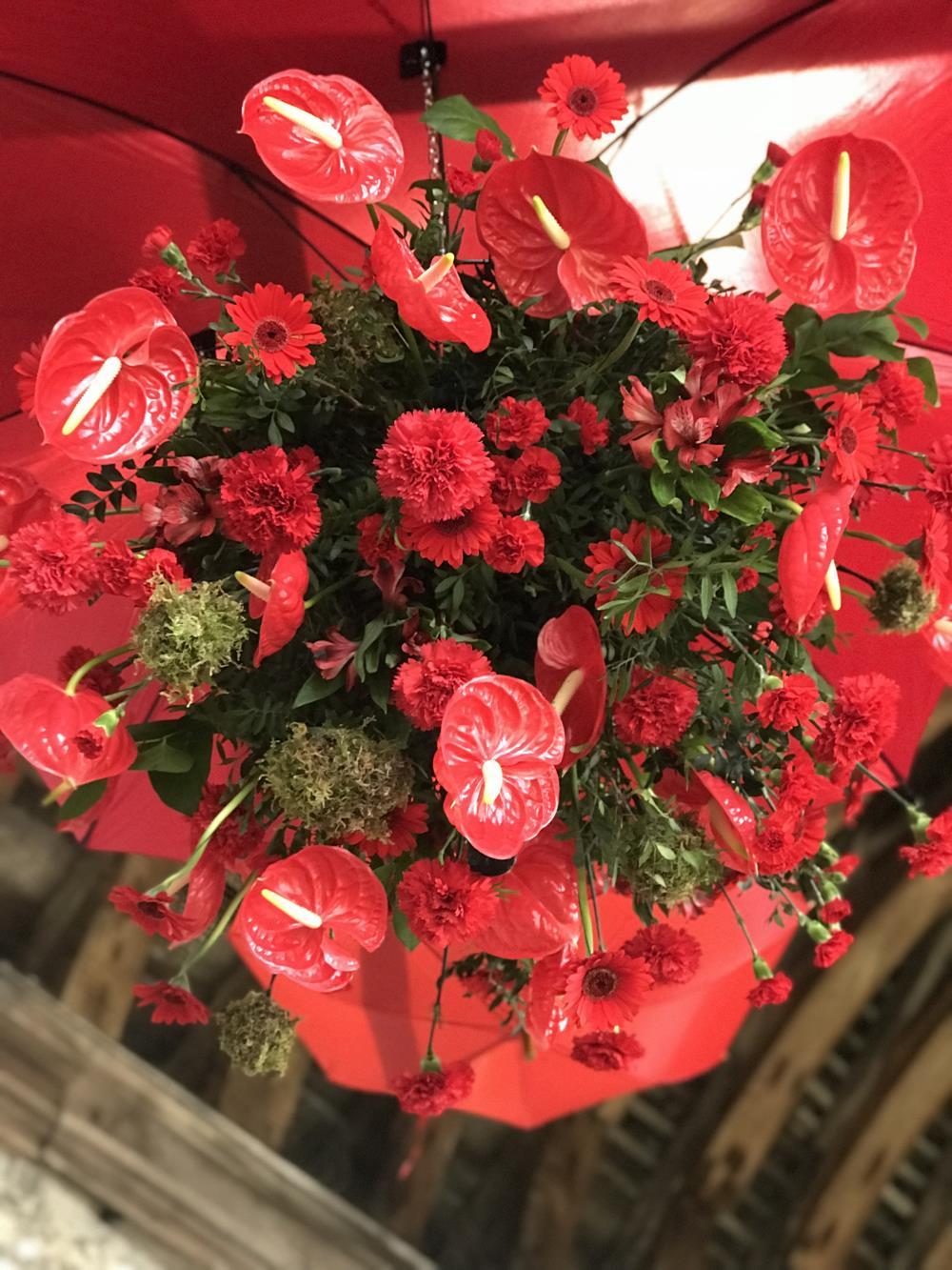 Red anthurium display