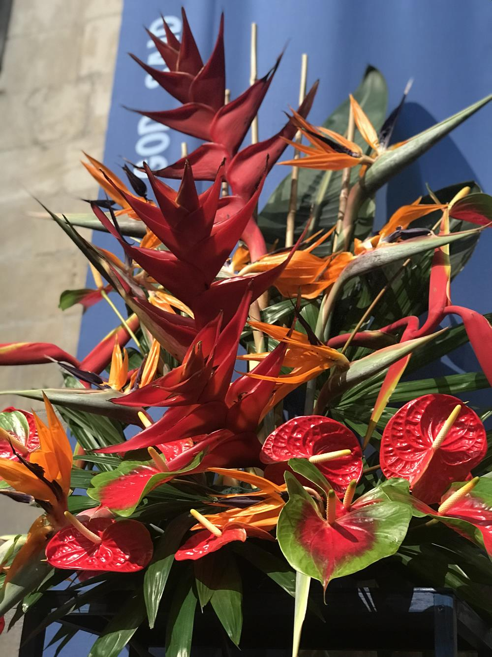 Anthurium flowers in arrangement at Chichester cathedral