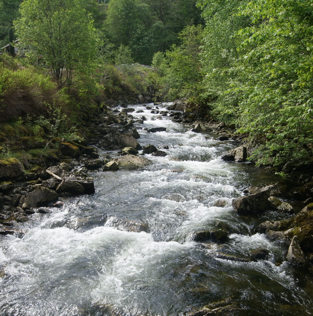 A mountain stream with trees either side