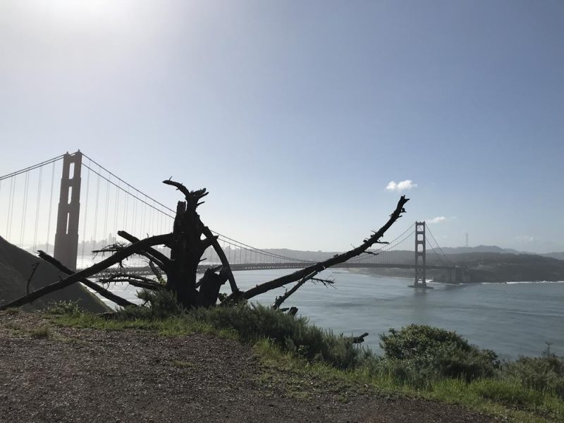 Golden Gate Bridge in the background with tree branch