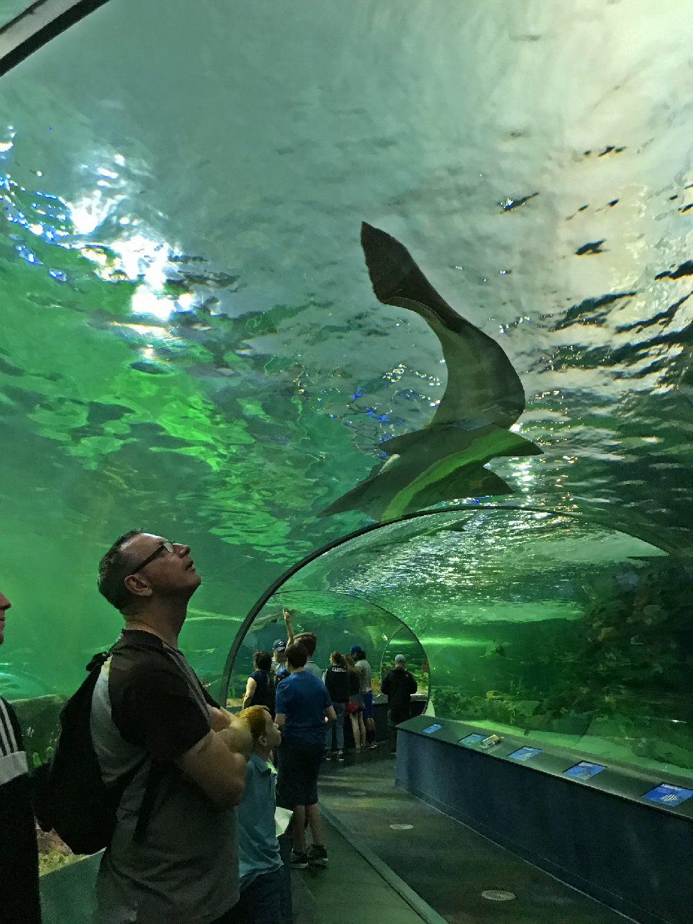 People looking at the rays and sharks from the immersive walkway at Ripley's aquarium in Toronto