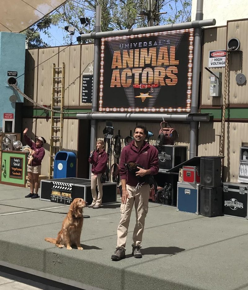 Dog and trainer at the Animal Actors show in Hollywood Studios, Los Angeles