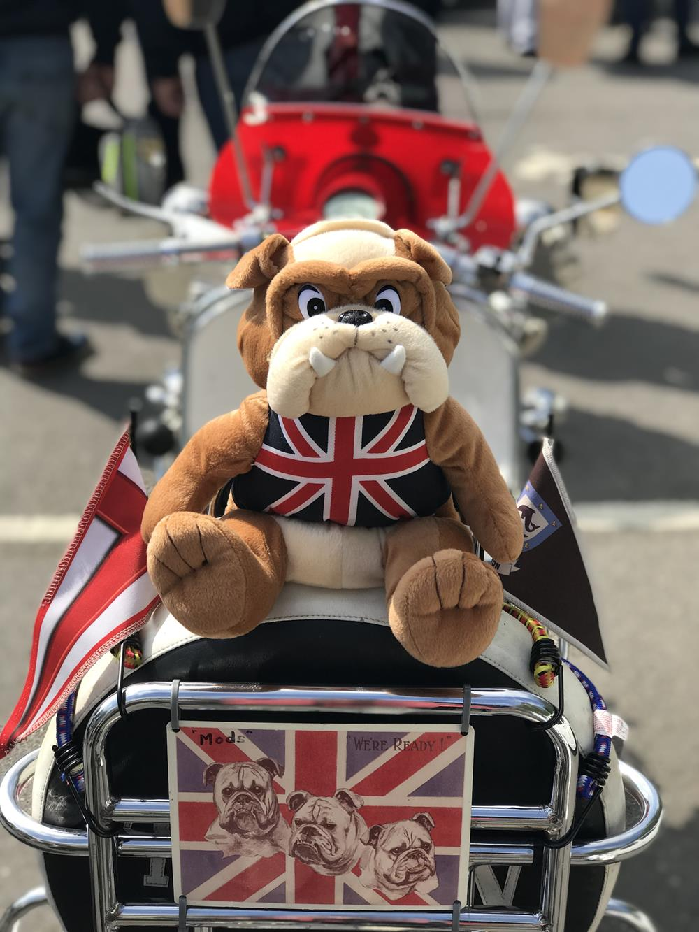 Bulldog cuddly toy attached to the back of a Vespa scooter